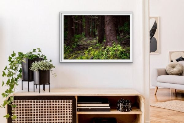 The persistence of moss in an ancient forest. Framed in white