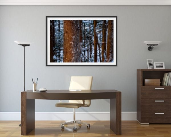 Winter forest glow - a snowy forest in Japan. Framed in black