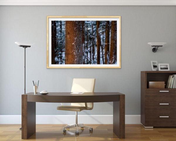 Winter forest glow - a snowy forest in Japan. Framed in Tasmanian oak