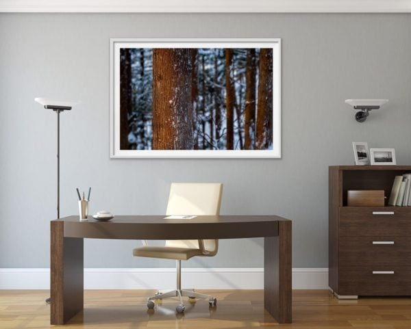 Winter forest glow - a snowy forest in Japan. Framed in white