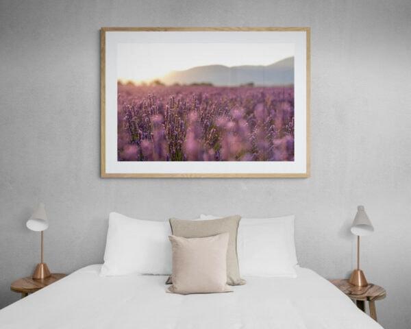 Golden afternoon light streams through a field of lavender. Framed in Tasmanian oak