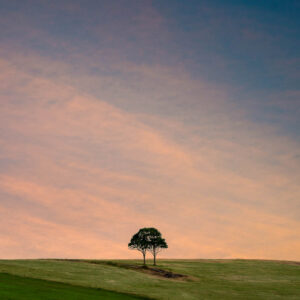 Twins - Two trees, growing as one on a hilltop. Jamberoo, Australia